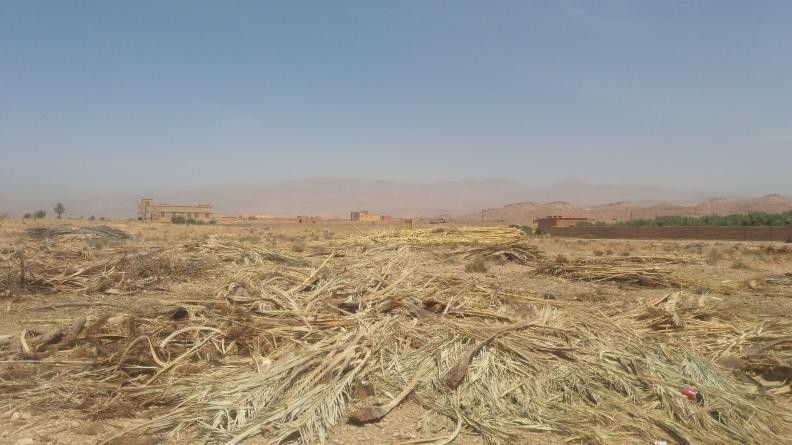 droogte in marokko.jpg